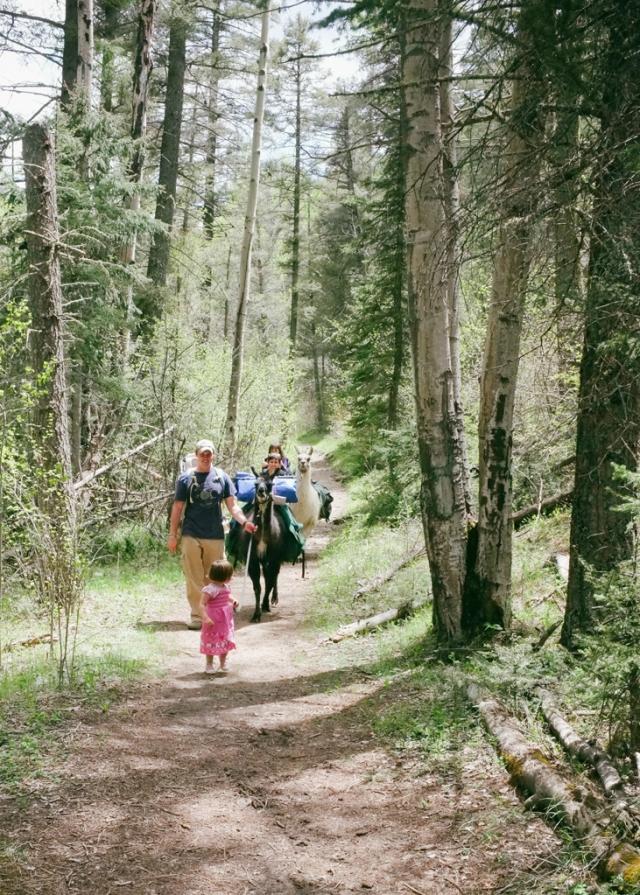 family hiking with llamas new mexico