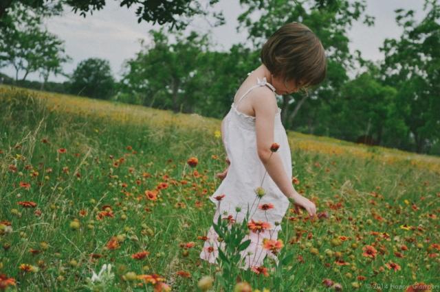 Blanket Flowers Johnson National Historic Park TX