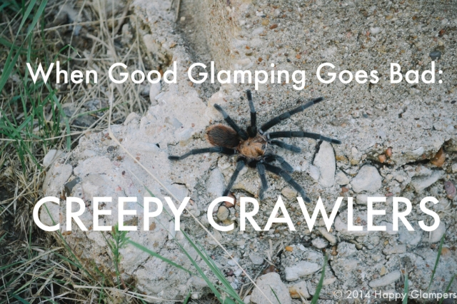 Camping and bugs, spiders, ants