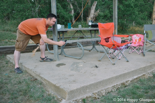 A tarantula encounter while glamping