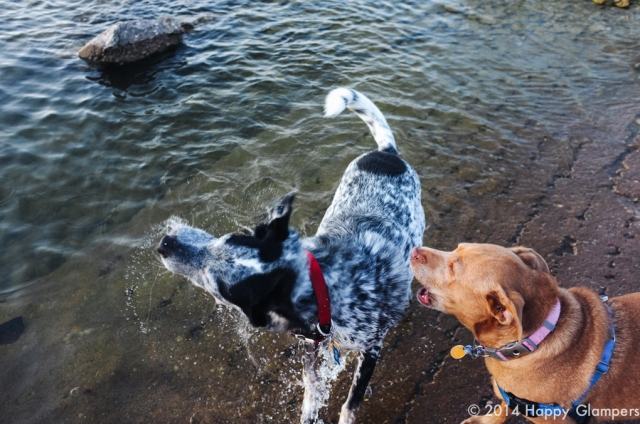 Dogs at Eisenhower State Park